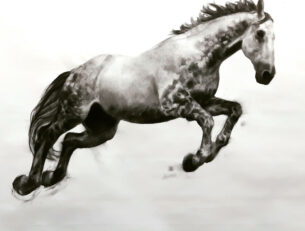 Pegasus, Charcoal and graphite on Fabriano paper, 84cm x 112cm, 2016